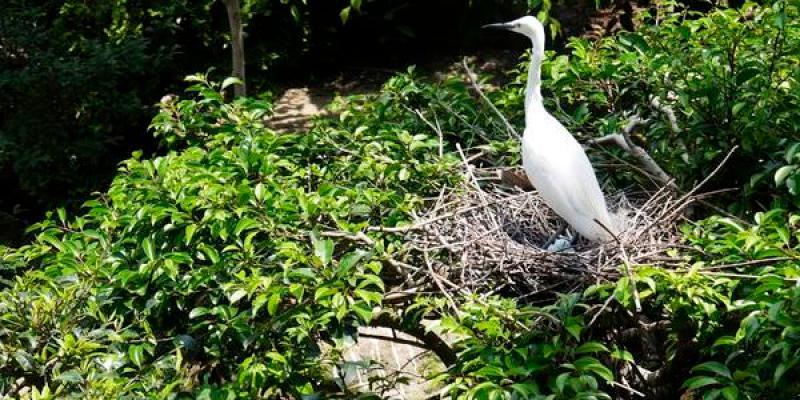【大阪景點】天王寺動物園。100週年紀念。憑大阪周遊卡免費入園參觀 親子景點 親子旅遊