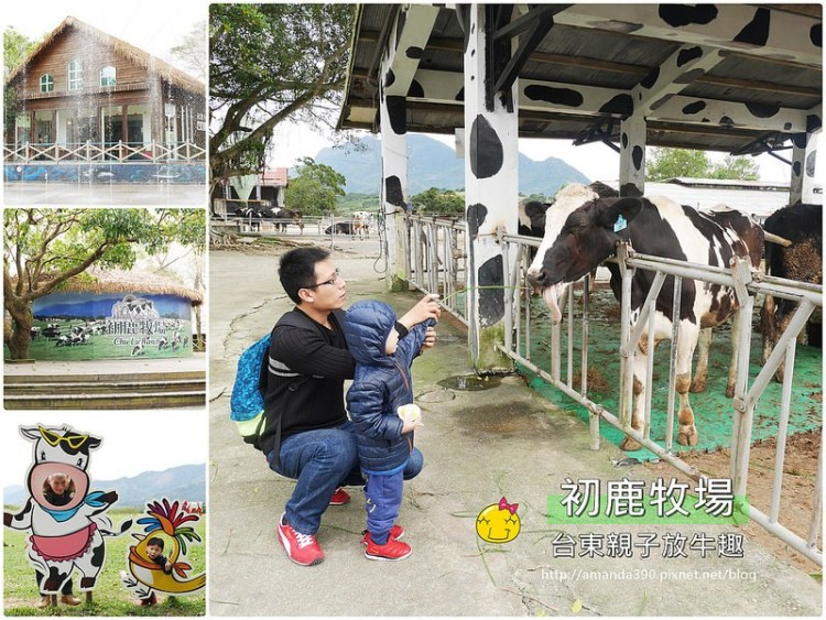 台東景點『初鹿牧場』與荷蘭乳牛的近距離接觸。親子台東踩點趣!台東親子活動|台東卑南鄉