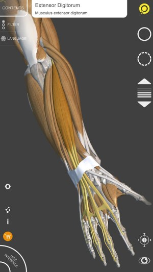3D Anatomy for the Artist 1.2.7.1 Screen 2