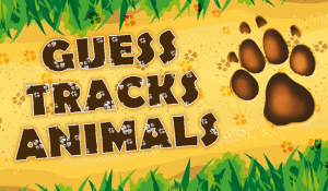 Guess the animal tracks 1.4 Screen 5