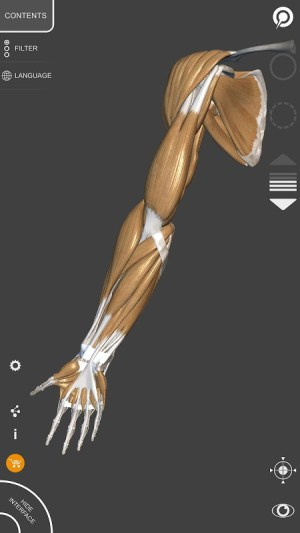 3D Anatomy for the Artist 1.2.7.1 Screen 1