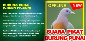Android Suara Burung Punai Green Pigeon HD Audio Screen 3
