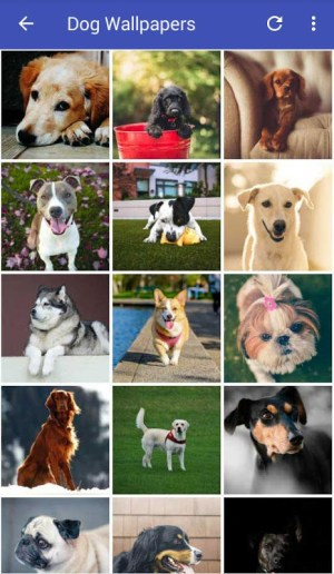 Dog Wallpapers HD 2.0 Screen 3