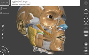 3D Anatomy for the Artist 1.2.7.1 Screen 13