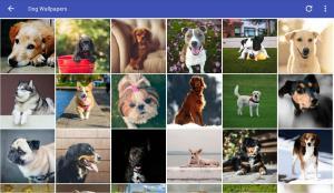Dog Wallpapers HD 2.0 Screen 2