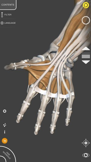 3D Anatomy for the Artist 1.2.7.1 Screen 4