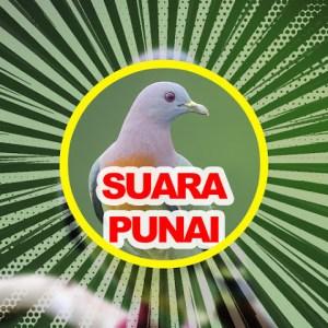 Android Suara Burung Punai Green Pigeon HD Audio Screen 6