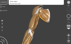 3D Anatomy for the Artist 1.2.7.1 Screen 8