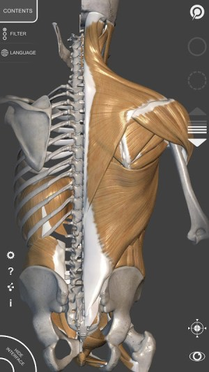 3D Anatomy for the Artist 1.2.7.1 Screen 11