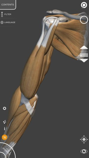 3D Anatomy for the Artist 1.2.7.1 Screen 7