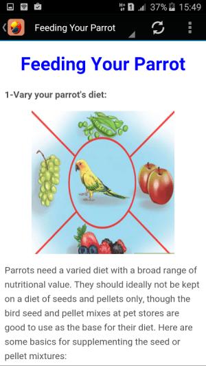 Parrot 1.0 Screen 2