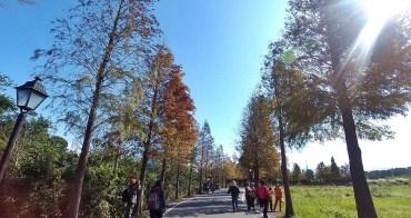 [桃園 旅遊]大溪石園路  邂逅屬於冬季的落羽松