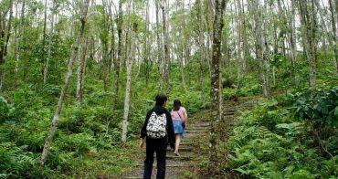 [宜蘭 旅遊]  拳頭姆步道  走進天送的掌中秘境 蕨類的綠意仙境