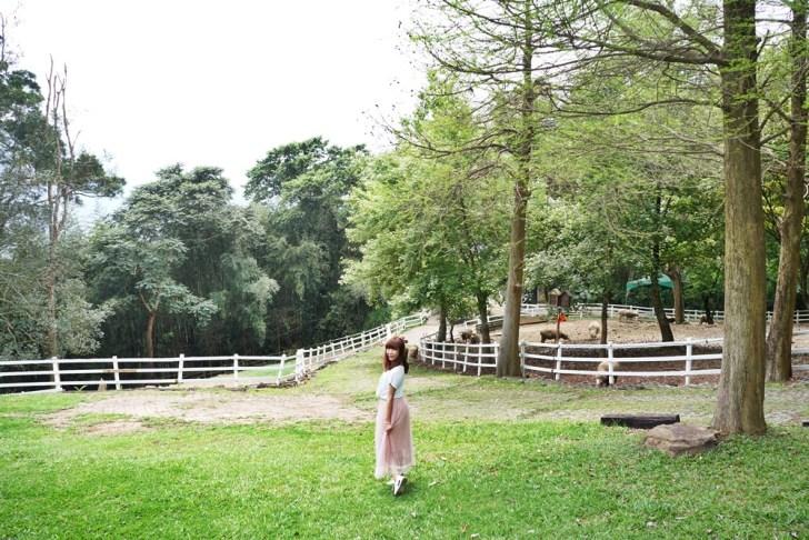 20190421171953 11 - 熱血採訪 [桃園旅遊]綠光森林綿羊牧場 一泊二食 親近羊群擁抱山林 被施了快樂魔法的森林牧場