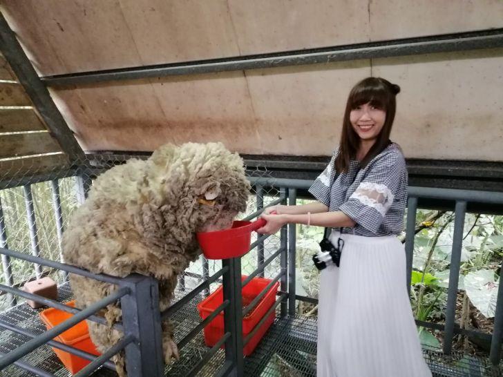 20190422134506 62 - 熱血採訪 [桃園旅遊]綠光森林綿羊牧場 一泊二食 親近羊群擁抱山林 被施了快樂魔法的森林牧場