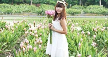 [彰化溪州 薑荷花花海]掬一把粉紅馨香 夢幻系鳳凰花隧道  那些屬於鄉野的溫馨小事