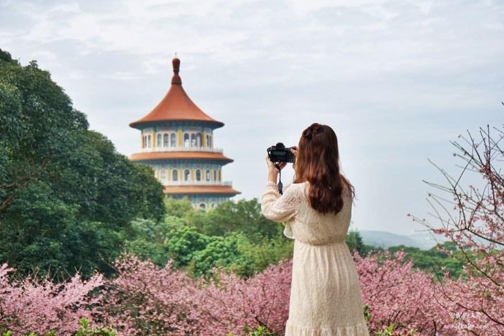20200125230114 60 - [台北賞櫻景點]淡水天元宮 粉紅三色櫻渲染山城 雄偉天元宮與櫻花的溫柔對話