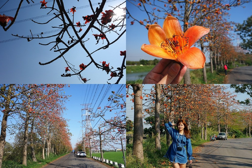 彰化埤頭木棉花道 | 沿著東螺溪畔欣賞整條木棉花壯盛開放美景!彰化埤頭著名景點。