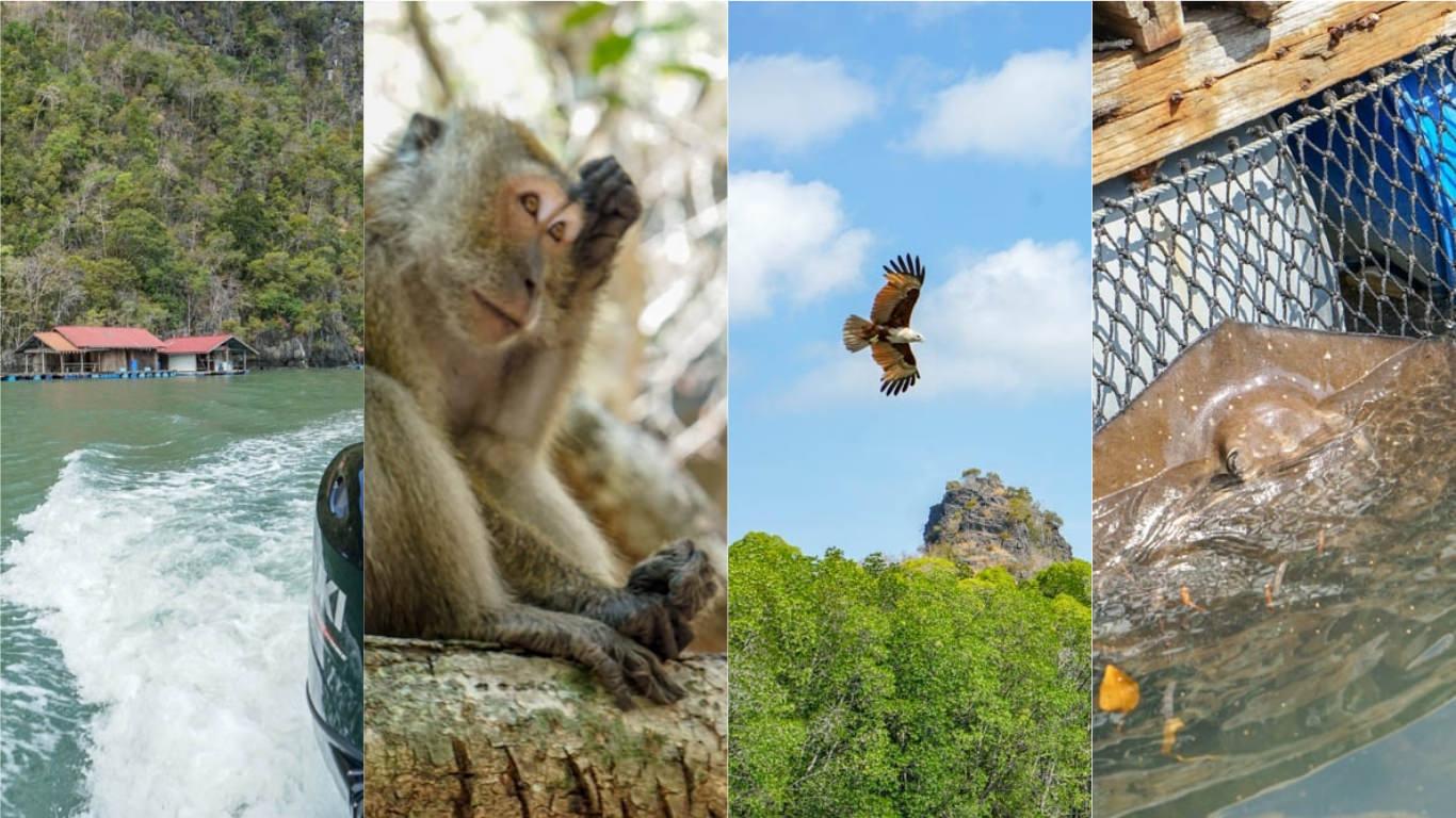 蘭卡威丹絨魯紅樹林地質公園快艇Kilim Karst Geoforest Park | 蝙蝠洞、賞老鷹、可愛魟魚。
