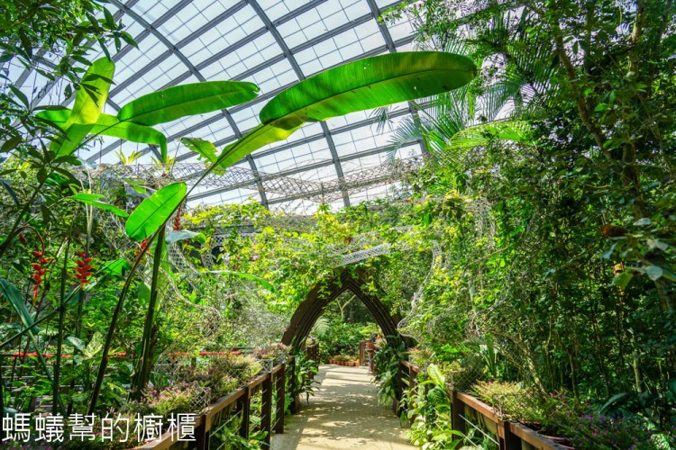 受保護的內容: 檳城Entopia蟲鳴大地 | 檳城自然動植物樂園,馬來西亞最大的蝴蝶公園,邂逅翩翩飛舞蝴蝶。