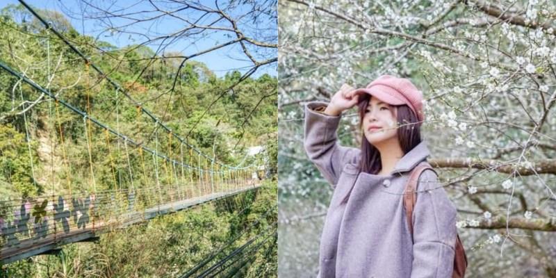 坪瀨琉璃光之橋健行園區   南投信義鄉旅遊景點,玻璃吊橋、冬季梅花、奇岩怪石,輕鬆好走健行步道。