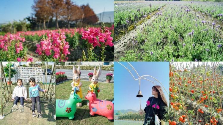 社頭之美園藝 | 彰化社頭田野野餐賞花,季節限定薰衣草、金魚花,提供兒童玩樂區。