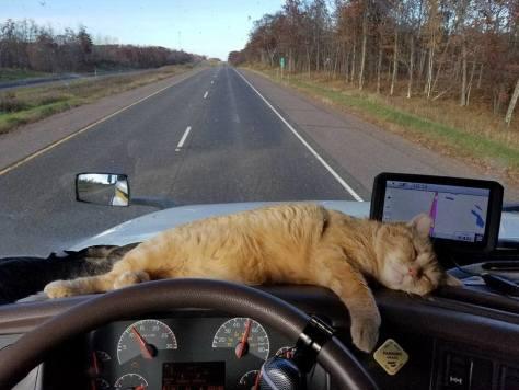 Image result for trucker