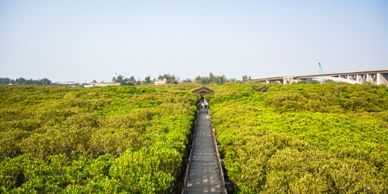 |新竹‧新豐|紅毛港紅樹林生態保護區,還可以體驗釣招潮蟹