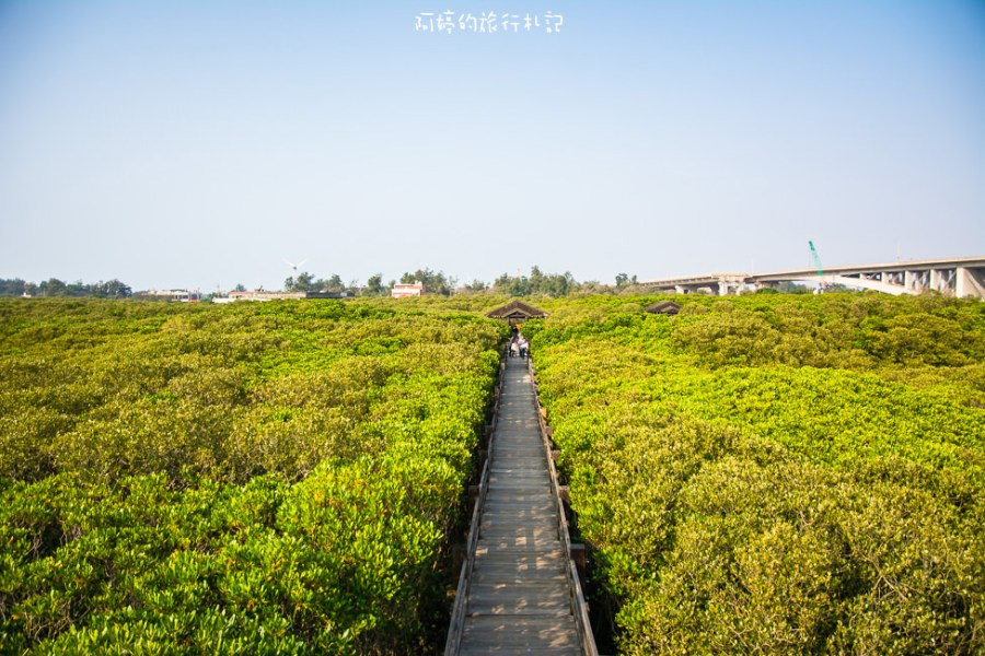  新竹‧新豐 紅毛港紅樹林生態保護區,還可以體驗釣招潮蟹