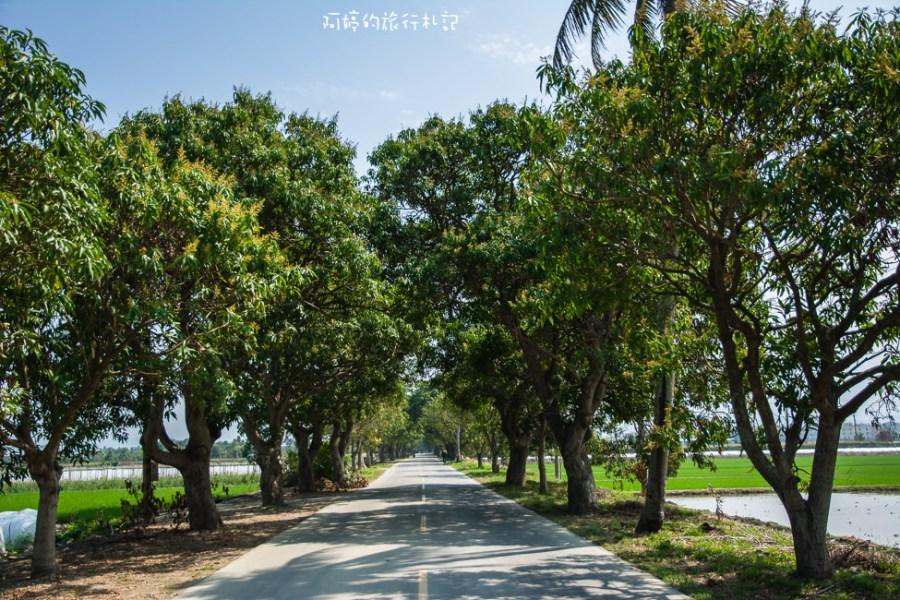 |台南‧白河|玉豐綠色隧道,是一整排老欉芒果樹