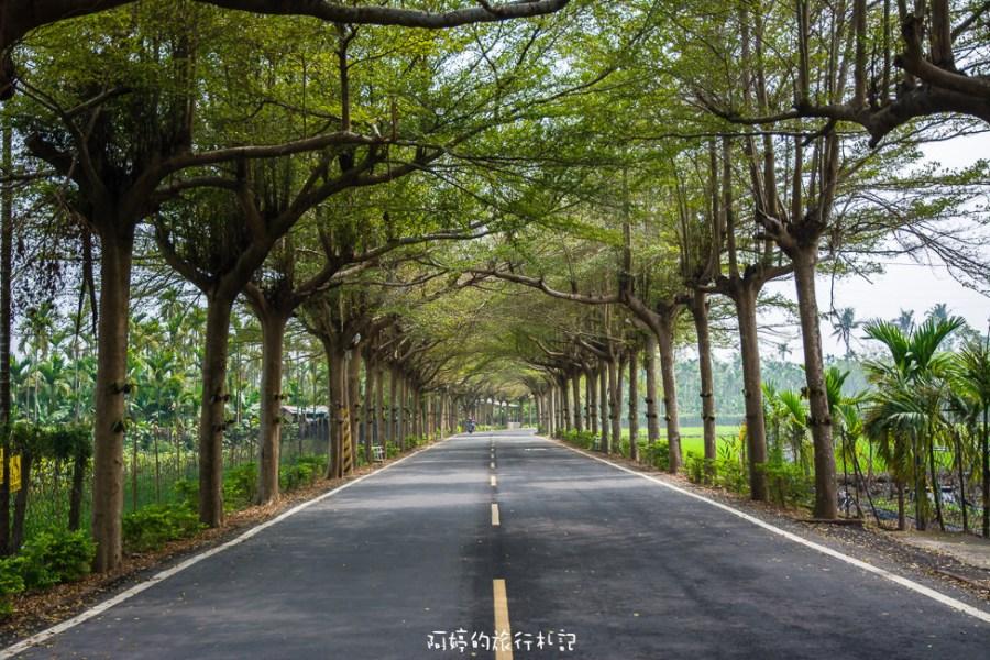  屏東景點 泗林健走步道,一公里長的小葉欖仁綠色隧道