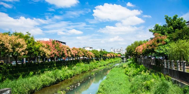 |屏東景點|萬年溪畔,台灣欒樹換妝盛開,讓溪畔充滿了浪漫風情