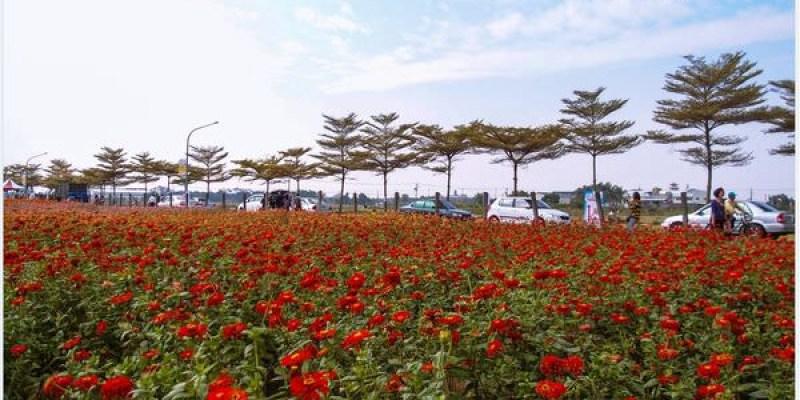 Kaohsiung|高雄‧橋頭|2013愛在花田囍事之三五好友賞花趣