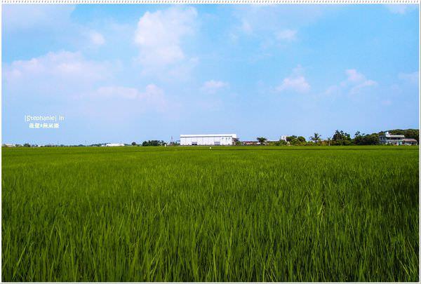 Tainan|台南‧後壁|稻田.知足常樂*無米樂