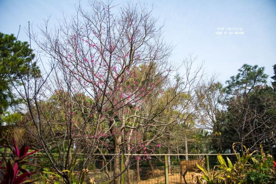 |新竹‧東區|全台灣最老的動物園*新竹市立動物園