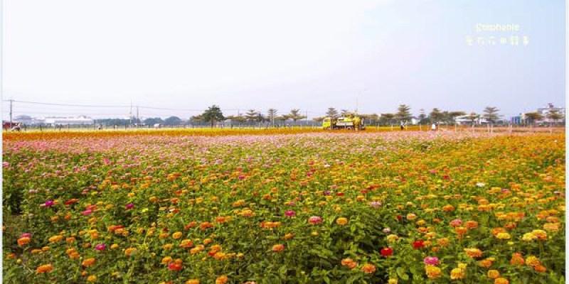 Kaohsiung|高雄‧橋頭|2013愛在花田囍事*搶先報(11/15花況)
