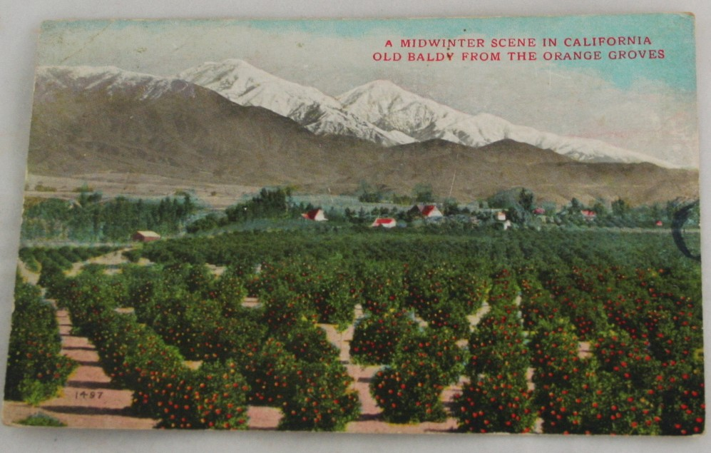 vintage postcard,hand colored,hand coloured,California,Midwinter, Old Baldy, Orange Groves