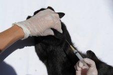 Oportunidades de empleo en el extranjero para veterinarios