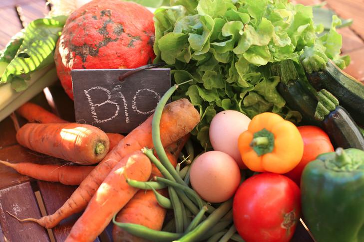 """Résultat de recherche d'images pour """"agriculture bio"""""""