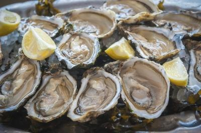 Image result for oysters facts