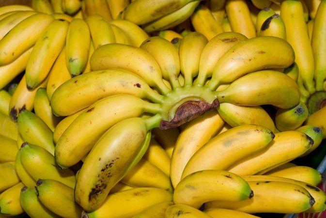Image result for Burro Banana
