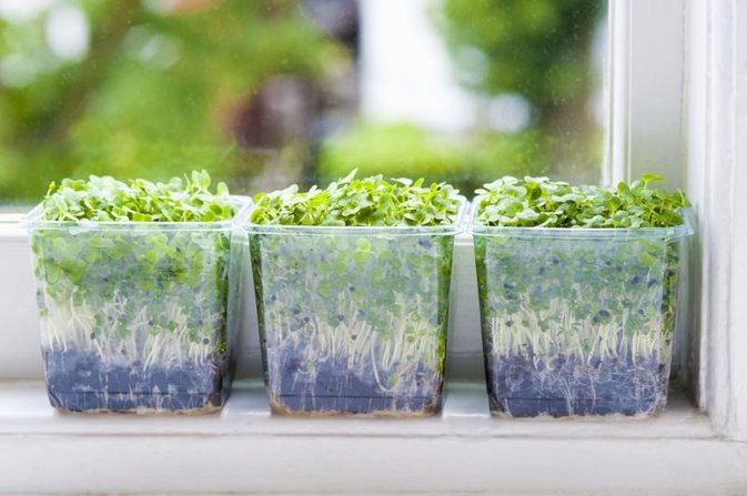 Food Safe Planters