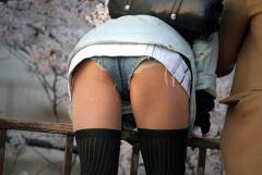 桜が咲いたらお股も開くw花見での無防備なパンチラ見聞録