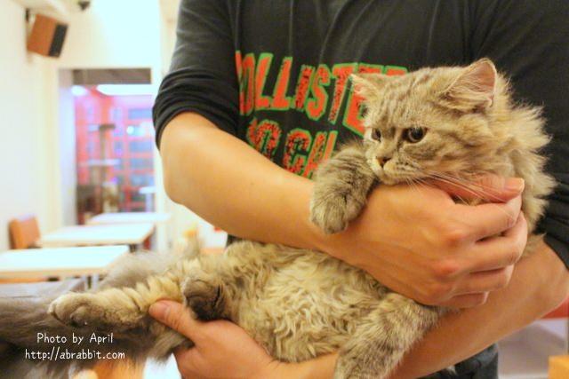 【兔兔專欄】[台中]貓爸貓咪主題餐廳–超多貓咪,貓奴們不能錯過,每隻貓都好溫馴喔!@西區 精美街