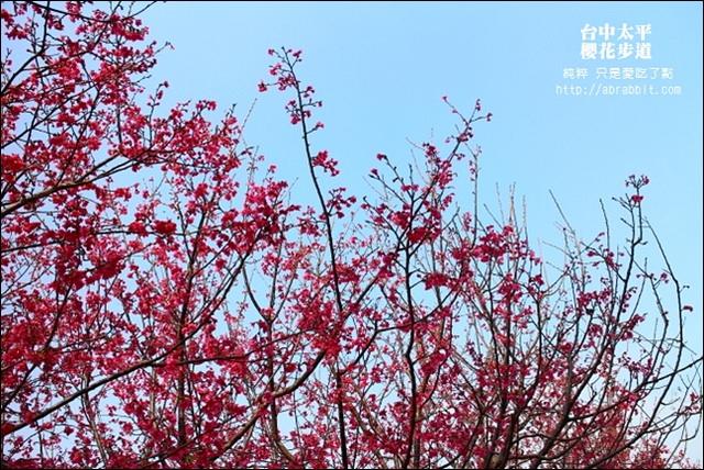 【兔兔專欄】[台中太平]太平的櫻花祕境:麗園公園櫻花步道