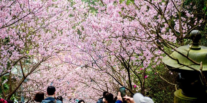 【台北】。內湖碧山巖櫻花階梯粉色登場!圓覺寺下車