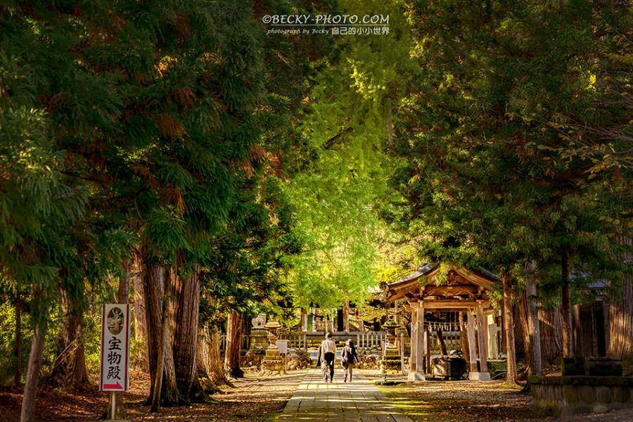 【福島】。喜多方景點~新宮熊野神社看百年大銀杏樹!東北福島行程