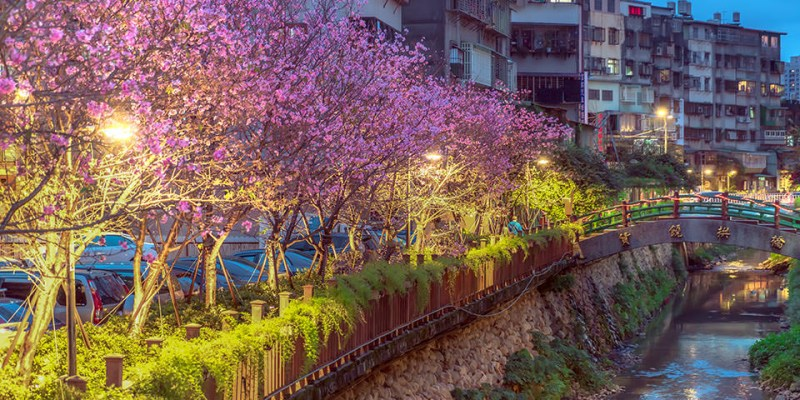 【新北】。台北捷運能到! 夜櫻拍攝《土城希望之河》