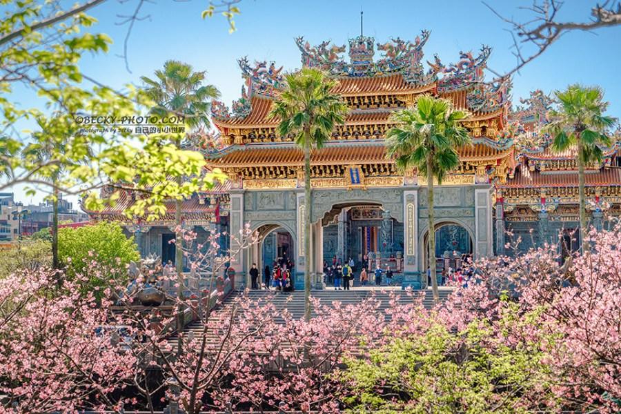 【新北】。林口寺廟拜拜賞櫻花! 竹林山觀音寺庭院粉色櫻花林