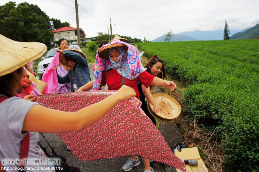 【台東】。找回遺忘的旅程~體驗鹿野採茶樂趣……變裝成採茶姑娘